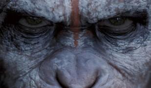 la-planete-des-singes-l-affrontement_